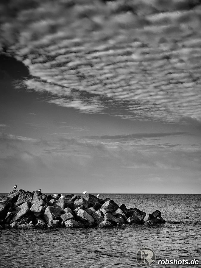 seagulls_on_rocks