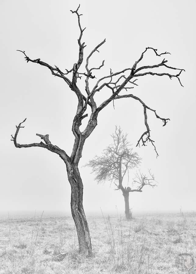 tree_white_II